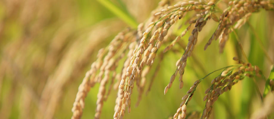 米穀の販売動向