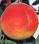 黄金桃 (無袋)