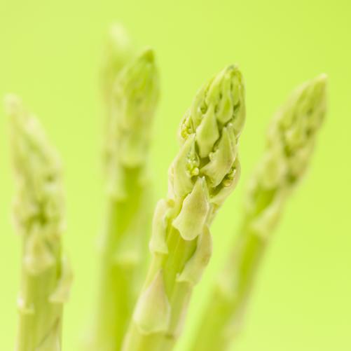 野菜・水稲